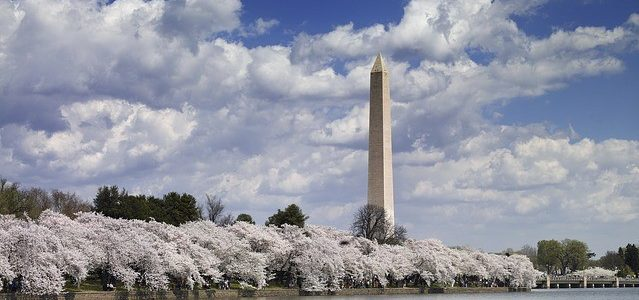 The blossoms have arrived and D.C. council members are late